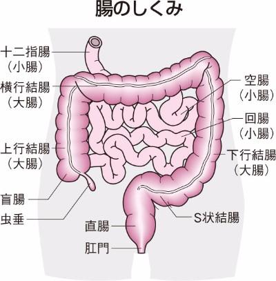 腸・腹膜の病気 ウィメンズ・メ...