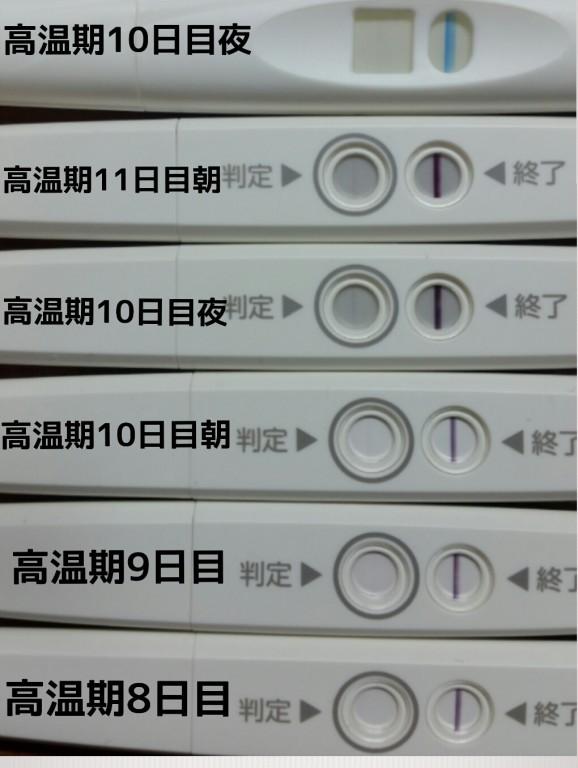 👆高温 期 9 日 目